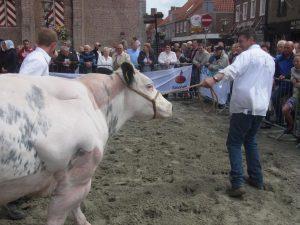Seeländischer Tag mit Zuchtvieh-Ausstellung @ Sluis Groote Markt | Sluis | Zeeland | Niederlande