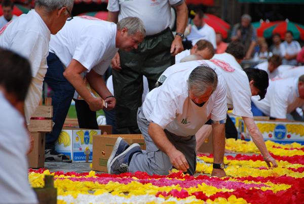Brüssel_Flowercarpet_2010_8