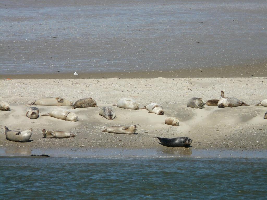 Exkursion zu Seehund-Bänken vom Jachthafen Cadzand-Bad - Breskens ...