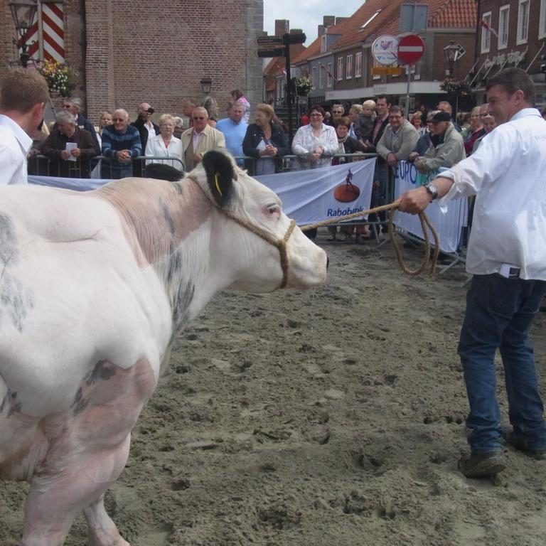 Folkloretag mit Zuchtvieh-Ausstellung in Sluis